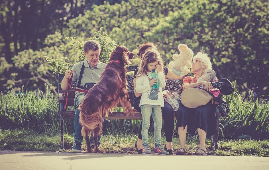 How to Create a Pet Estate Plan